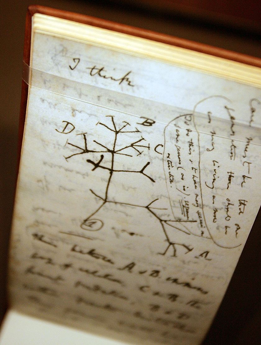 The History Of The Evolution Debate In The United States Pew  This Tree Of Life Sketch By Charles Darwin From An  Notebook  Illustrates His Idea That Species Evolve From Earlier Life Forms